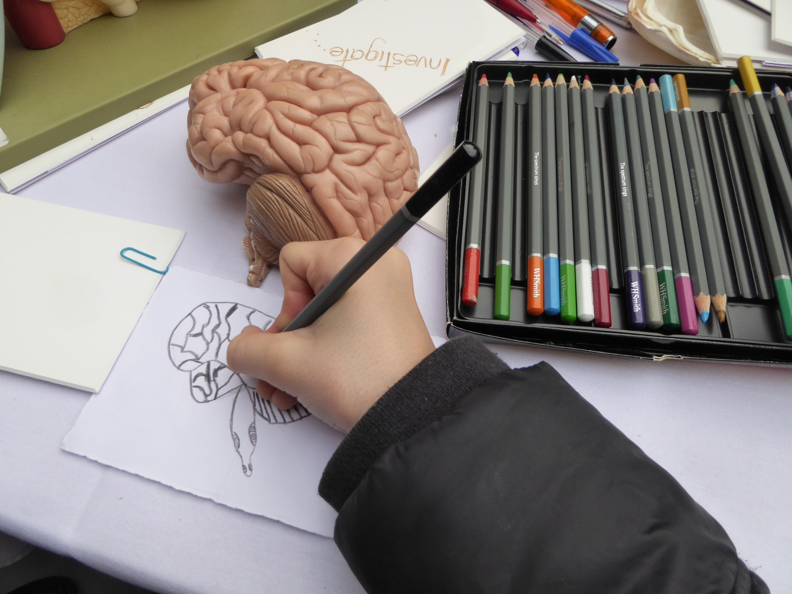 drawing-the-brain
